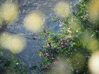 冬の大柿花山2 - 光の音色を聞きながら Ⅴ