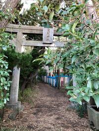 祈り - 猫多摩散歩日記 2