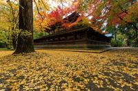紅葉が彩る京都2019上御霊神社 - 花景色-K.W.C. PhotoBlog