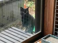 黒猫ちゃん - Lucky★Dip666-Ⅳ