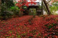 紅葉が彩る京都2019彩りの参道 - 花景色-K.W.C. PhotoBlog