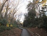 稲荷山公園と斜面 - ひのきよ