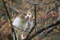 河津桜が咲きました! - 愛にゃんブログ