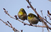 小鳥たち - イーハトーブ・ガーデン