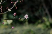 道しるべ - 花の仕事と。。日々の暮らし。。