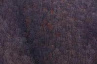 紅葉が彩る奈良2019晩秋の行者還林道 - 花景色-K.W.C. PhotoBlog