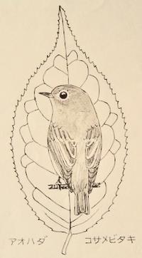 『 #木の葉絵#leafart 』 青膚・小鮫鶲 - スケッチ感察ノート (Nature journal)