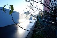 朝の光 / X70 - minamiazabu de 散歩