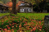 紅葉が彩る京都2019深まる常照皇寺の秋 - 花景色-K.W.C. PhotoBlog
