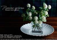 花が恋するスタイリング、略して恋バナ を 自由が丘で。profotoA1x + SEL85F18 作例 - さいとうおりのお気に入りはカメラで。