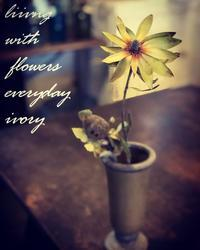 """明日1月26(日)は、 『雪bolo』さんの、 """"天然酵母パン""""の日‼︎ -  Flower and cafe 花空間 ivory (アイボリー)"""