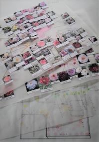 Garden Storyさんにて連載記事「実録!庭づくり第1話移植作業を行う前までにすべき10のこと」がアップされました。 - バラとハーブのある暮らし Salon de Roses