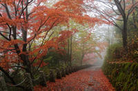 雨の吉野山② - katsuのヘタッピ風景