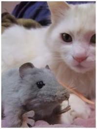 ネズミの対処は尻をかじる -  one's  heart