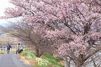 早咲きの桜 - 暮らしの中で