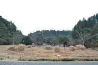 里山の鳥の観察会 - 千葉県いすみ環境と文化のさとセンター