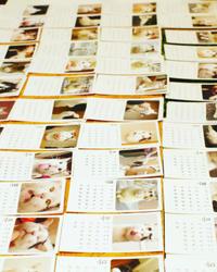 うちの猫ら写真展2020(って言うけどほとんどナナクロじゃん!)最終日。 - ぶつぶつ独り言2(うちの猫ら2018)