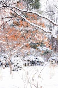 豊平公園にて~後編 - 柳に雪折れなし!Ⅱ