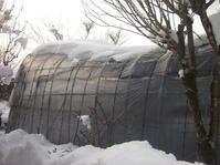 小西養鯉場&小西米プロジェクトTheOdyssey2020-7鯉の里は米の郷 - 鯉の里は、米の郷