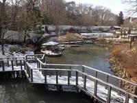 残雪の多摩~マレーバクと鳴きまくるインドガンの群れ(February 2019) - 続々・動物園ありマス。