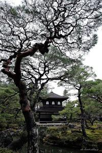 銀閣寺つづき - A  B  C