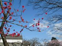 春の江戸東京たてもの園 - Der Liebling ~蚤の市フリークの雑貨手帖3冊目~