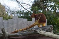 タニ編 - 動物園へ行こう