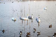 明日は雪だるまマークだすよ・・「みんな!」 - Nature World & Flyfishing