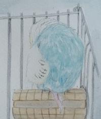 ぐっすり - 水色堂 ~Blue & Yellow Budgie~
