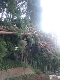 台風被害 - スペース356