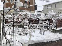 大雪ではなかった☆外壁塗装その② - my small garden~sugar plum~