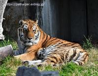 2020年1月天王寺動物園その4 - ハープの徒然草