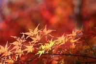 ちょっとだけ秋の紅葉 - 平凡な日々の中で