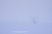 白い霧の朝 - ekkoの --- four seasons --- 北海道