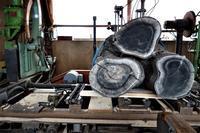 桜丸太3本の枝のある木製材 - SOLiD「無垢材セレクトカタログ」/ 材木店・製材所 新発田屋(シバタヤ)
