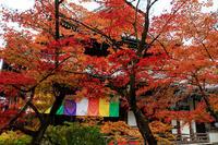 紅葉が彩る京都2019深まる秋(今熊野観音寺) - 花景色-K.W.C. PhotoBlog