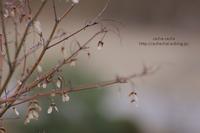冬枯れの紅葉 - cache-cache