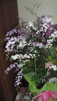 花を戴いた - メロン作り日記