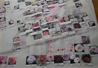 Garden Storyさんにて元木代表の記事「実録!庭づくり第1話移植作業を行う前までにすべき10のこと」がご掲載頂きました。 -  日本ローズライフコーディネーター協会