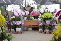 冬は暖かいところで撮影会~とちぎ花センター~ - 日々の贈り物(私の宇都宮生活)