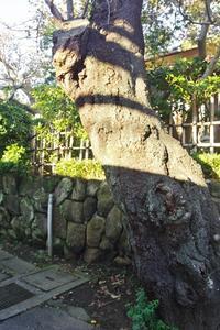 樹木のポートレート - はーとらんど写真感