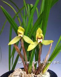 禮門No.2006 - 東洋蘭風来記奥部屋