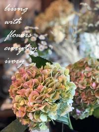 2月START‼︎ -  Flower and cafe 花空間 ivory (アイボリー)
