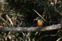 小さな池の鳥 - そらと林と鳥