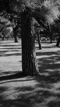 丸の内スナップ / X70 - minamiazabu de 散歩