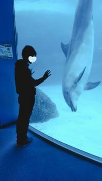 名古屋港水族館→メイカーズピア→ファニチャードーム→個営ハンバーガーコースで雨の日だってデートしたい! - 名古屋から日帰りでどこまで行ける?