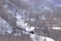 木の枝が邪魔…- 2020年・釧網線 - - ねこの撮った汽車