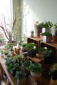 観葉植物を楽しむ - 花と暮らす店 木花 Mocca