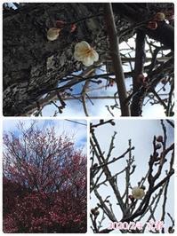 立春 - ひとり言