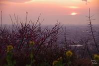 大阪八尾市神立玉祖(たまおや)神社からの夕景 - ぶらり記録 2:奈良・大阪・・・